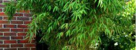 terrasse bambou